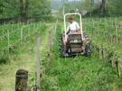 Chateau la Grolet - biodynamic vineyard
