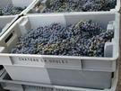 Chateau la Grolet - bio-dynamically grown grapes