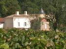 Chateau la Grolet vines