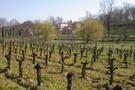 Chateau la Grolet - vineyard