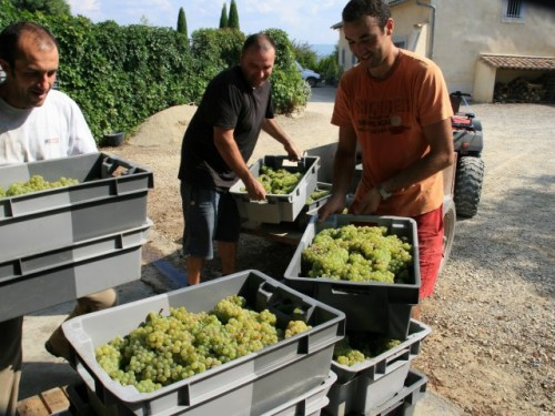 Domaine Begude Etoile grapes