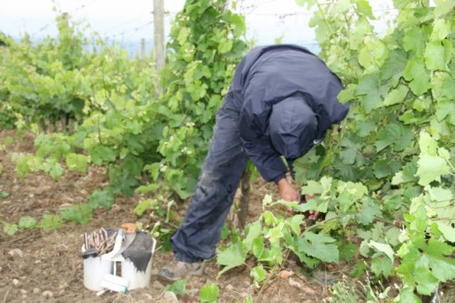 Domaine Begude Grading