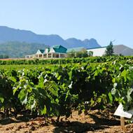 Imbuko vineyard